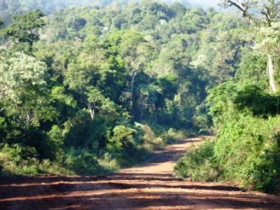 La selva misionera sigue siendo el principal recurso de la provincia